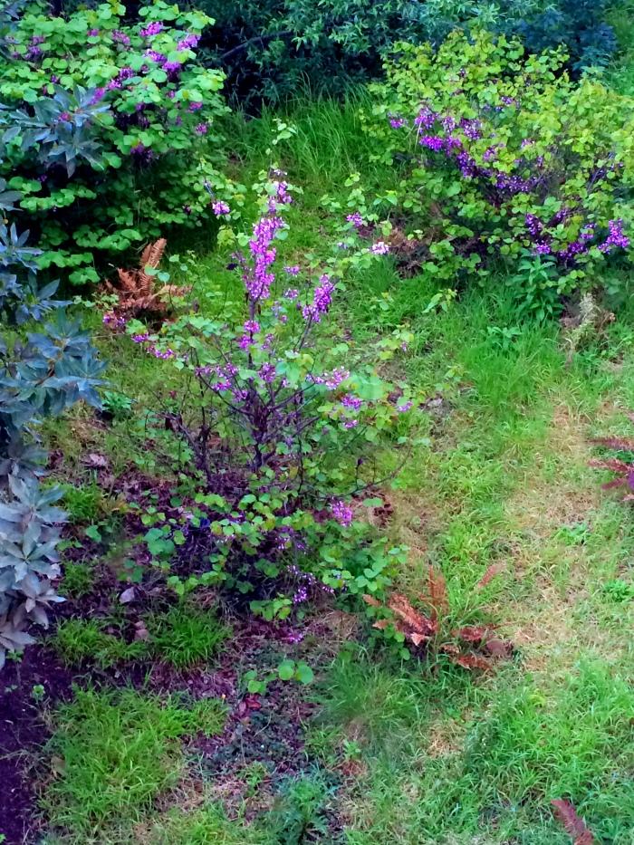 Mountain Meadow Medow