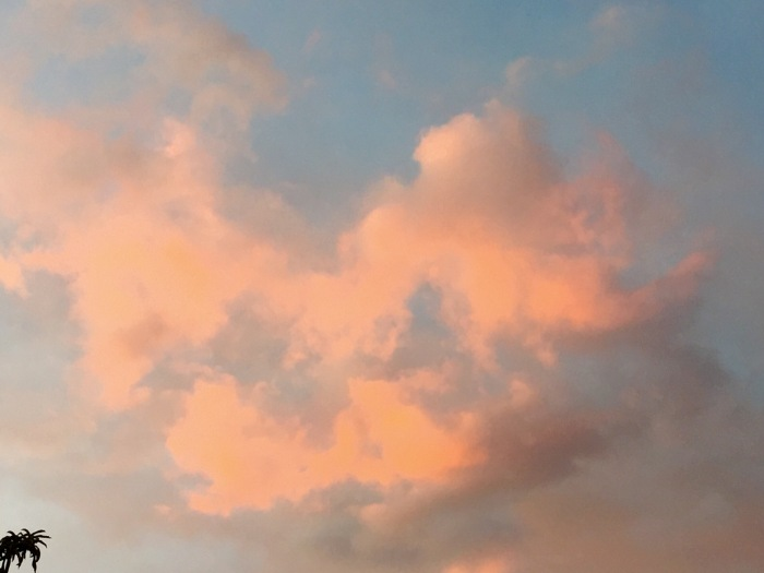 Elephant Sherbert Sky