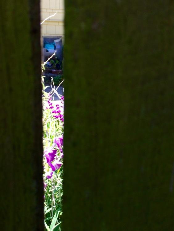 Fence Gap
