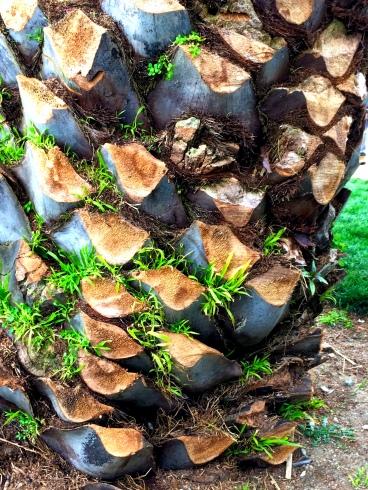 Fresh Cut Palm