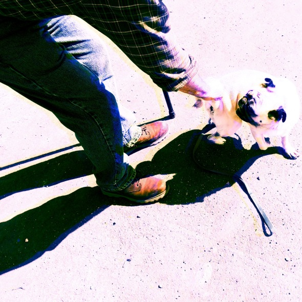 Pet The Pug