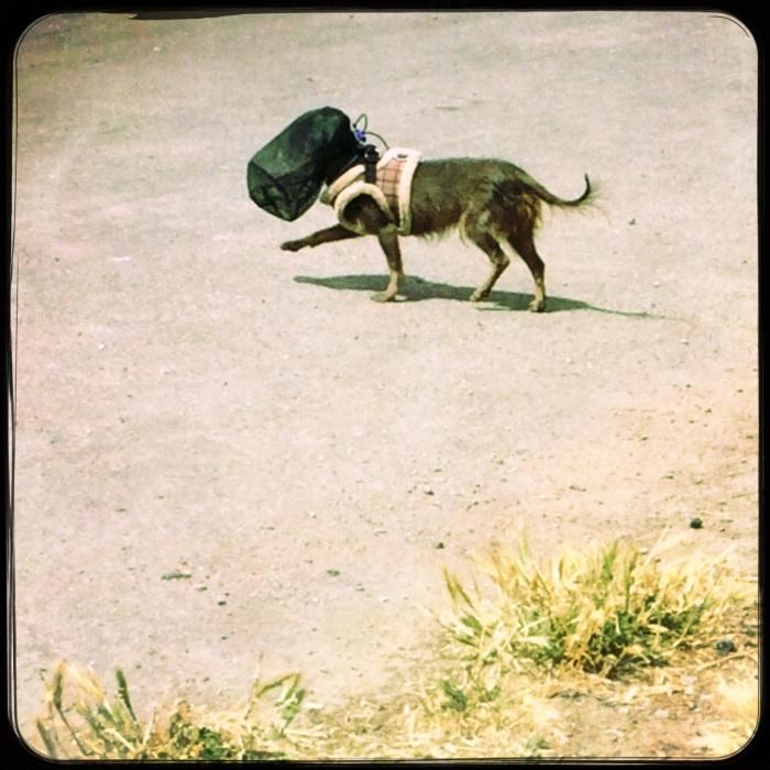 Storm Trouper Pup?