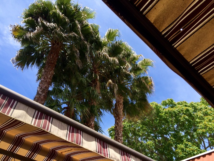 Palm and awning