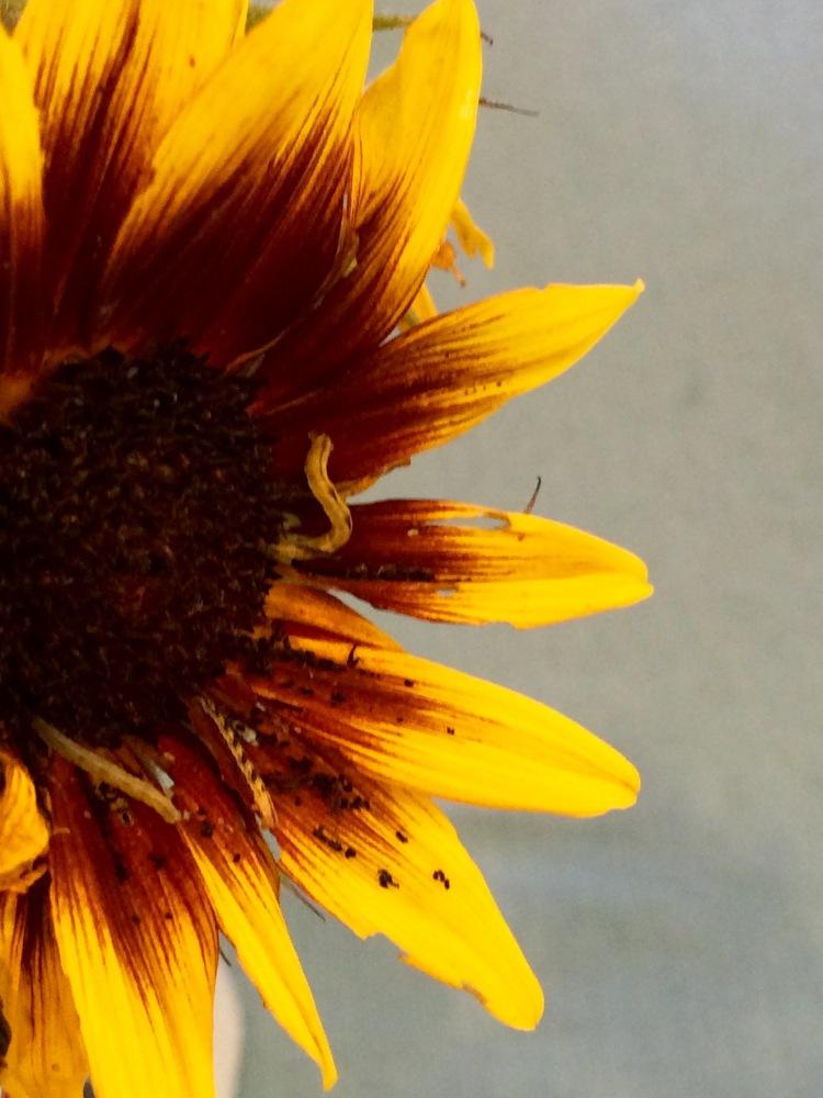 2 Sunflower