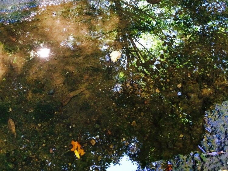Shallow water reflecting poo;