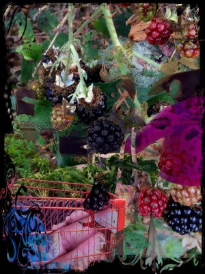 Farmes market and blackberry patch