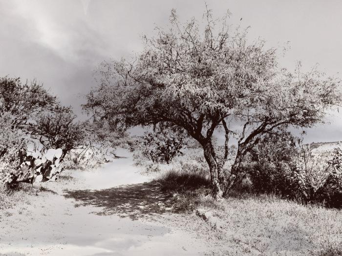 Shade tree 2