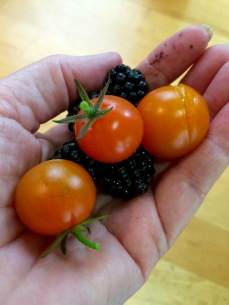 A handful of tomatoes and blackberries