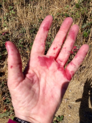 Blackberry stained hand