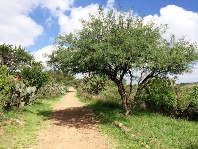 Tree Shading Path