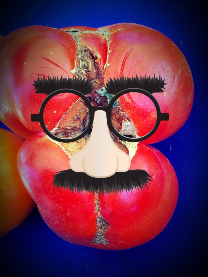 Hairloom Groucho Tomato