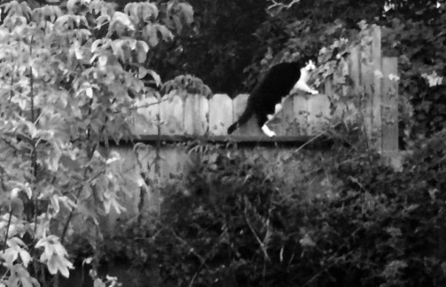 Creeping Cat