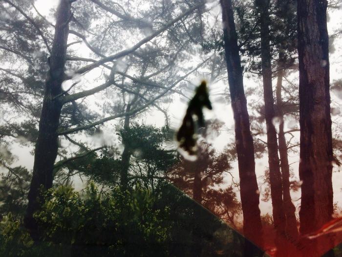 Ghost woods