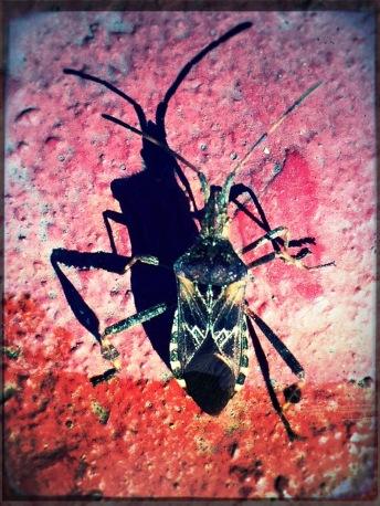 Bug Photo Montague Pixlr