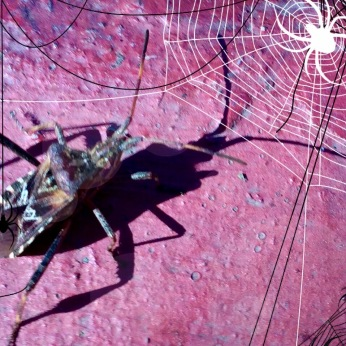 Spiders and Bug
