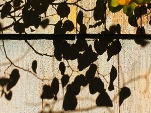 Leaf Halk