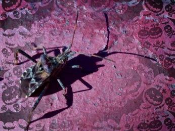 Bug and Jack-o-Lanterns