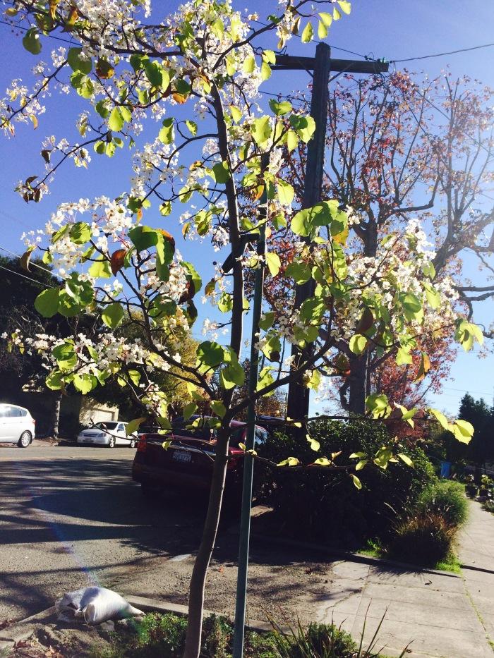Two seasons of Street Trees