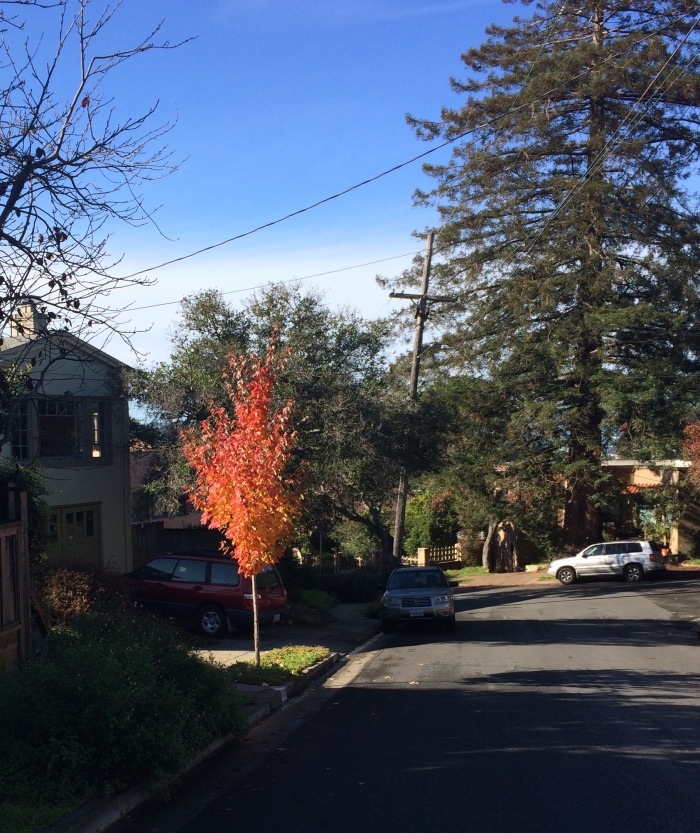 Flaming Street Trees