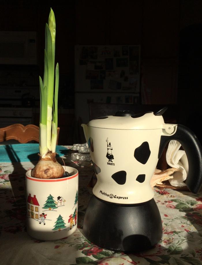 Odd Coffee