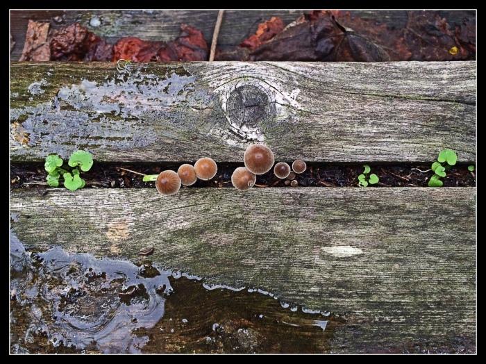Wee Mushrooms