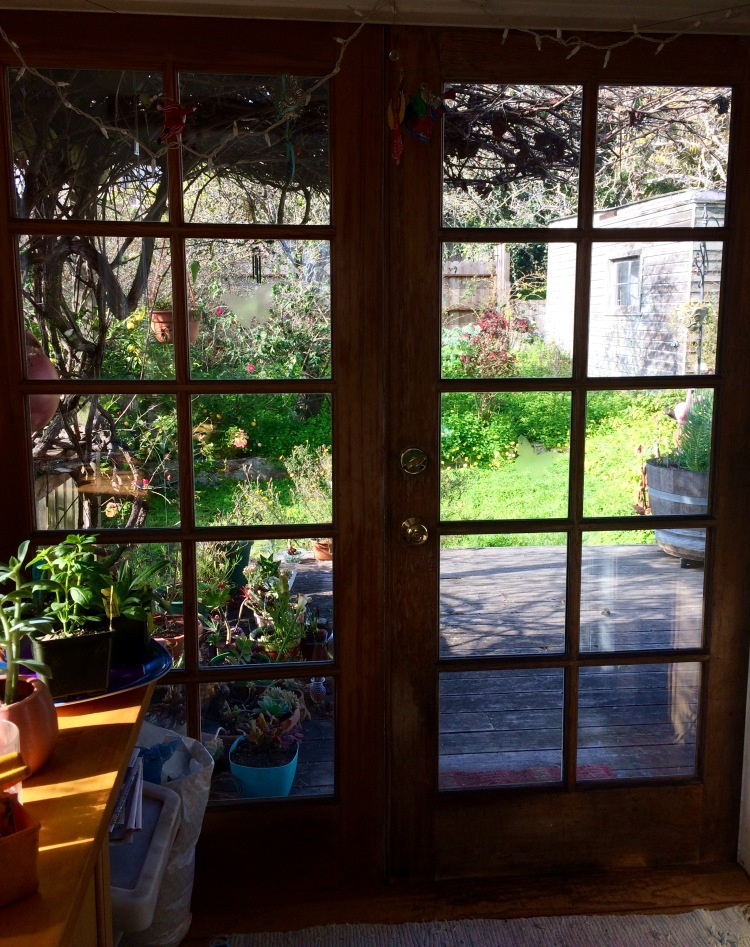 Looking out my Kitchen window