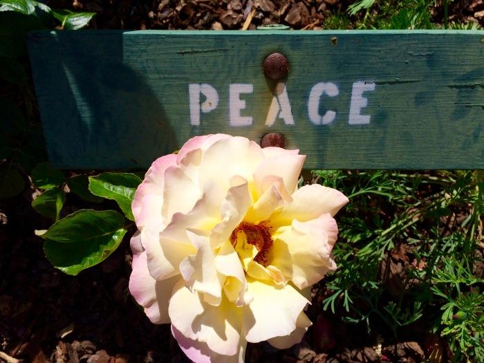 Peace Rosefullsizerender