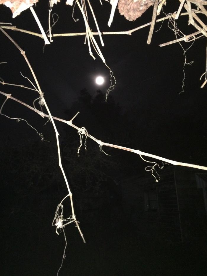 Ripe Moon