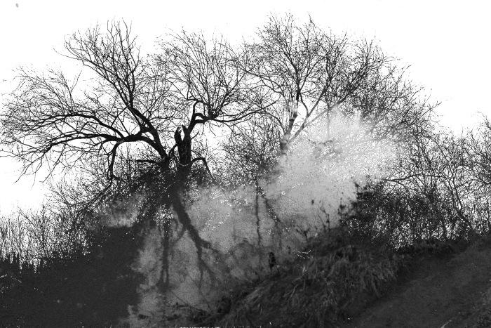 The Flood Pixlar edit of Winter trees,