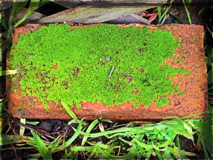 Mossy Brick