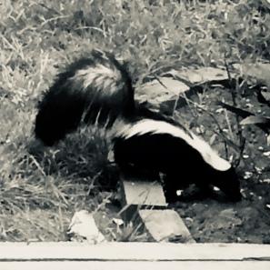 Skunke tail