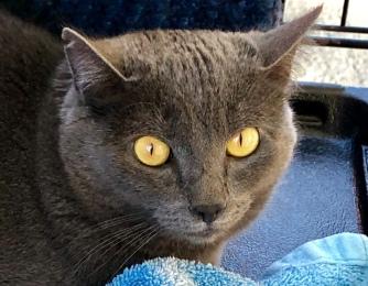 Big yellow eyes!