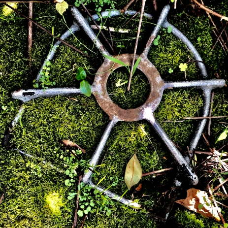 Mandala in the garden