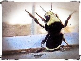 Bee on window sill