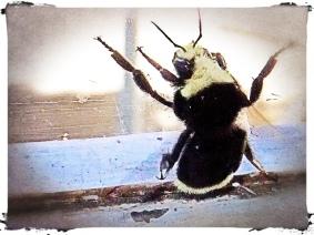 Bee on window sill