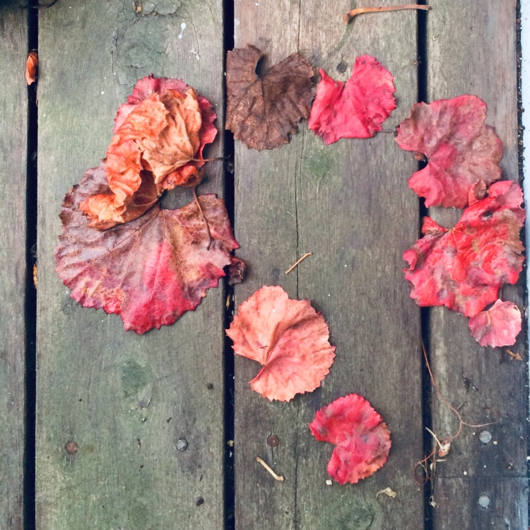 Grape leaves on the deck