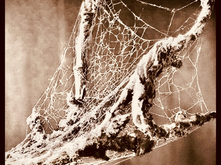 Branch with spider web