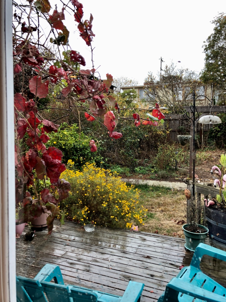 The yard during first rain