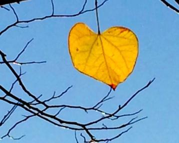 Redbud leaf
