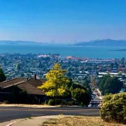 Ginkgo overlooking the Bay