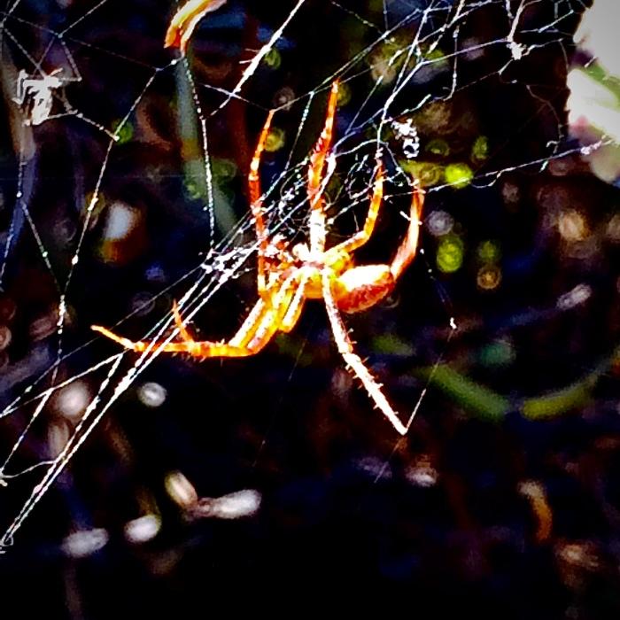 3 Long legend spider