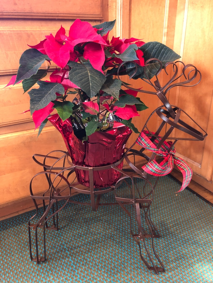 Deer and poinsettia