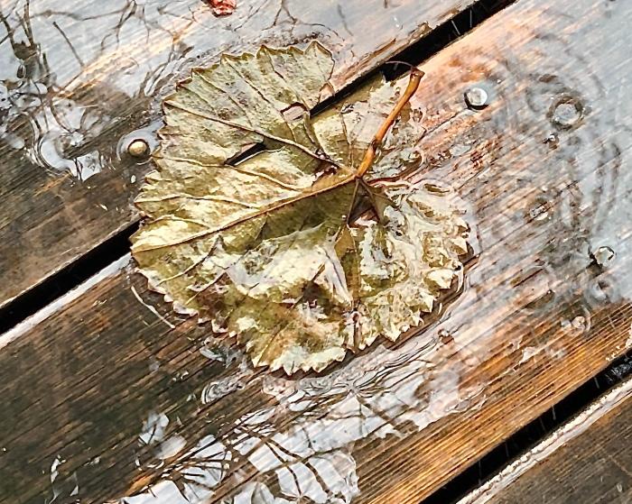 Grape leaf on deck