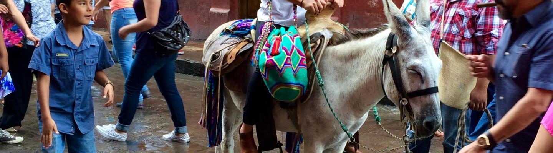Donkey San Miguel Allende