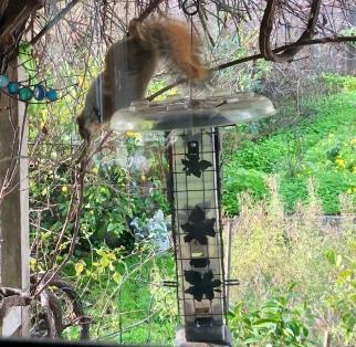 Still squirrel proof