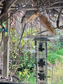 It's a squirrel proof feeder