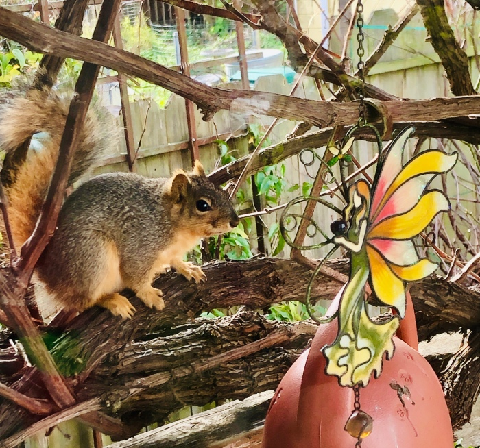 Squirrel and Fairy