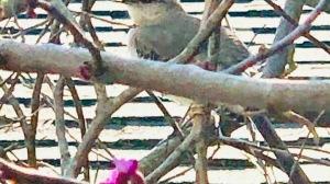 Mockingbird close uo
