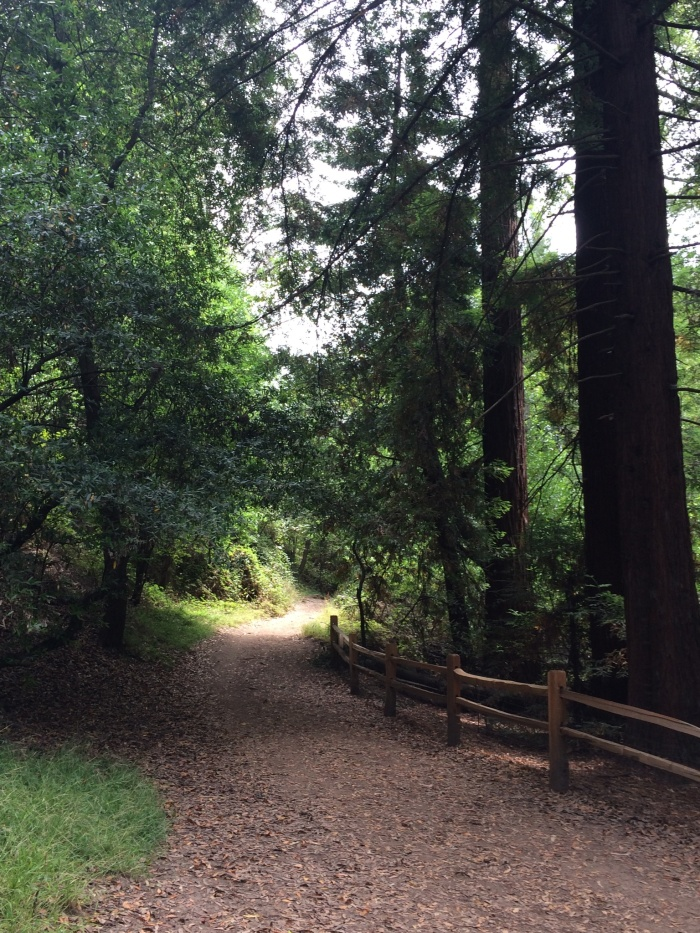 Tilden Park