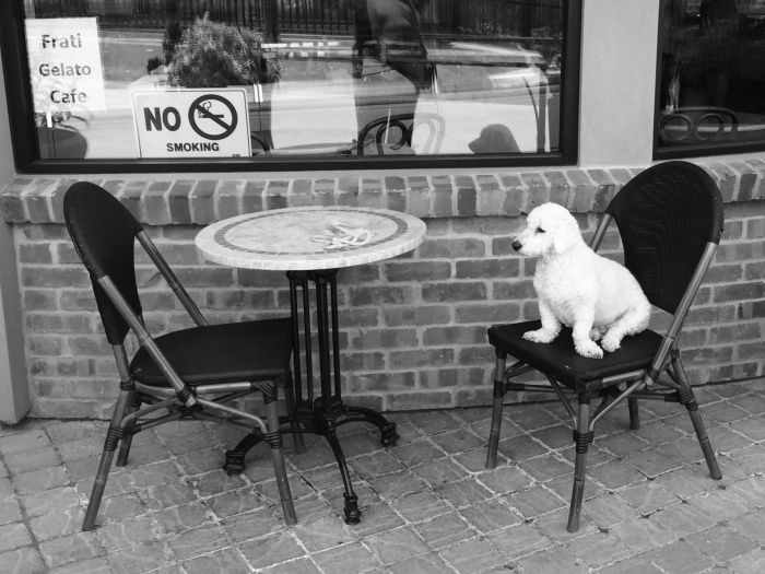 Pup and Chair